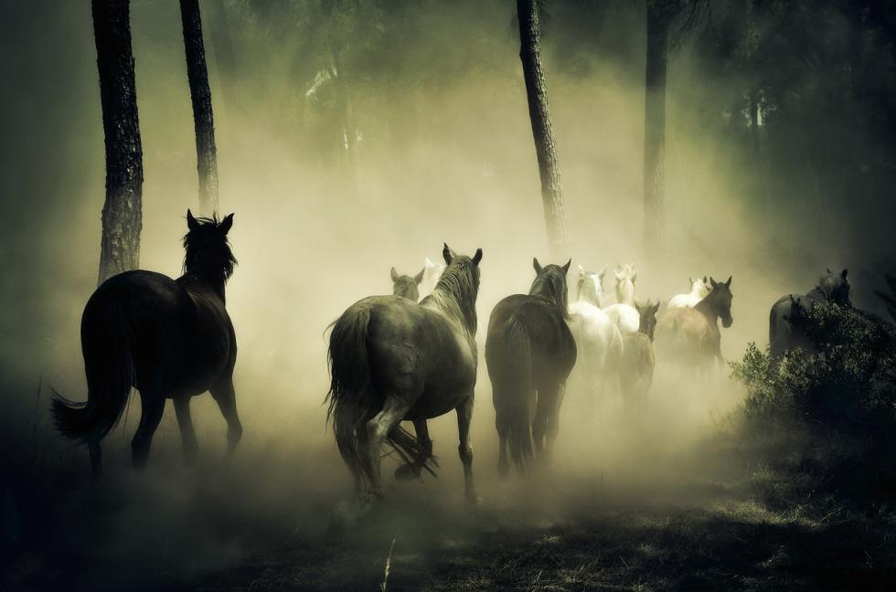 horses-1759214_1280.jpg