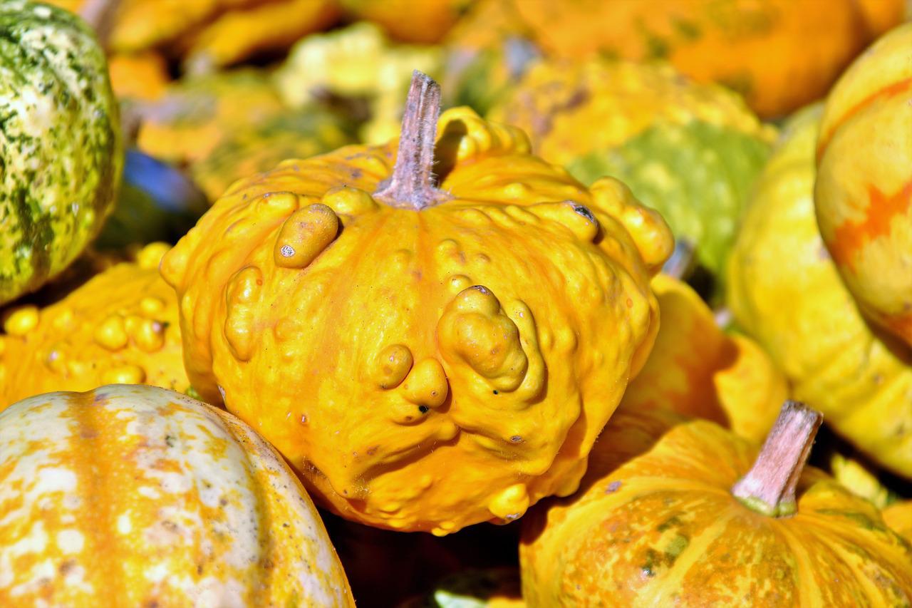pumpkin-3693243_1280.jpg