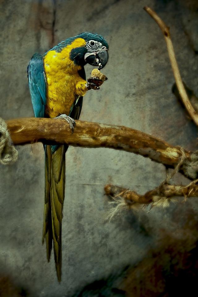 parrot-846074_1920-1