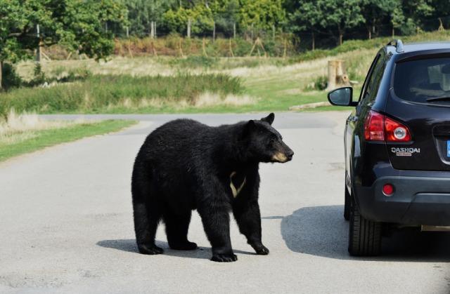 bear-3801041_1280